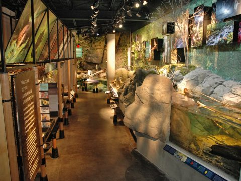 May Drive and Dine: Placid Overnight and the Wild Center
